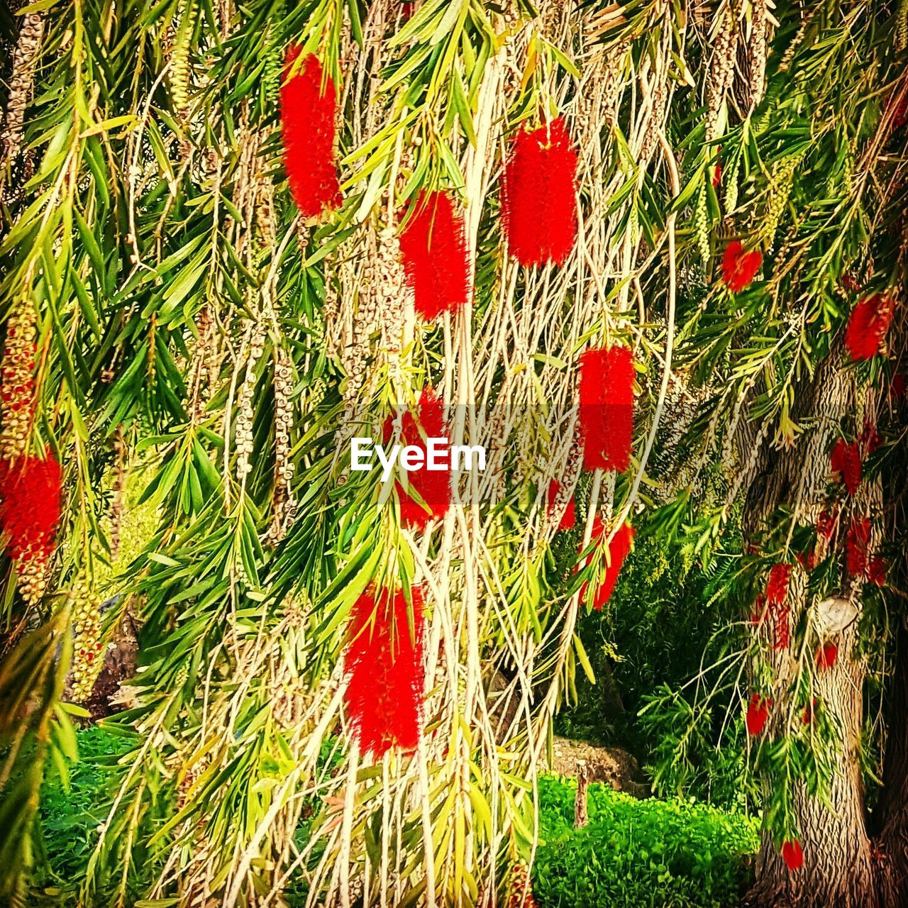 red, no people, day, green color, grass, outdoors, growth, nature, multi colored, close-up, beauty in nature, freshness