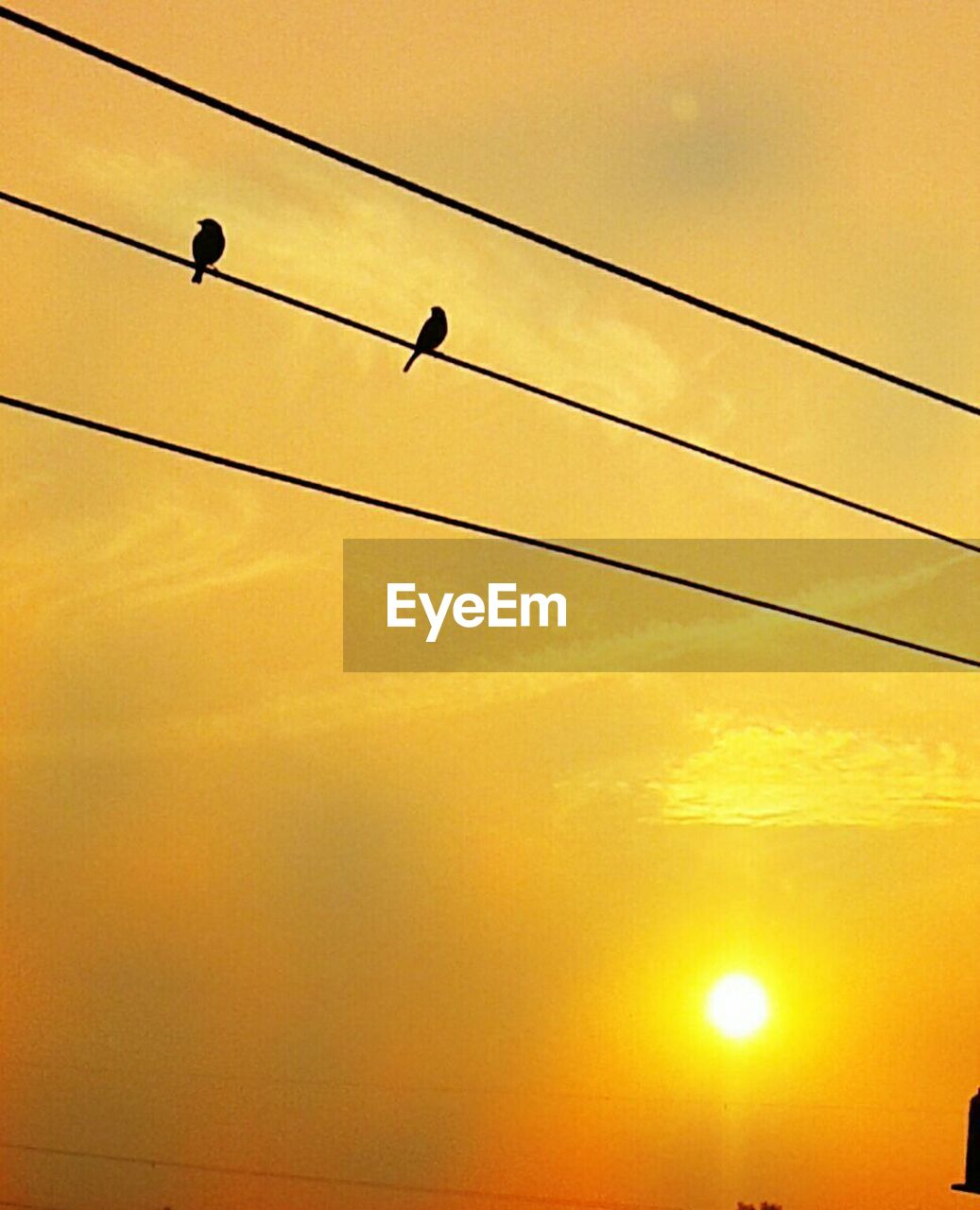 cable, sunset, power line, power supply, connection, low angle view, silhouette, electricity, bird, animals in the wild, no people, telephone line, sky, electricity pylon, outdoors, nature, technology, animal themes, perching, fuel and power generation, beauty in nature, day
