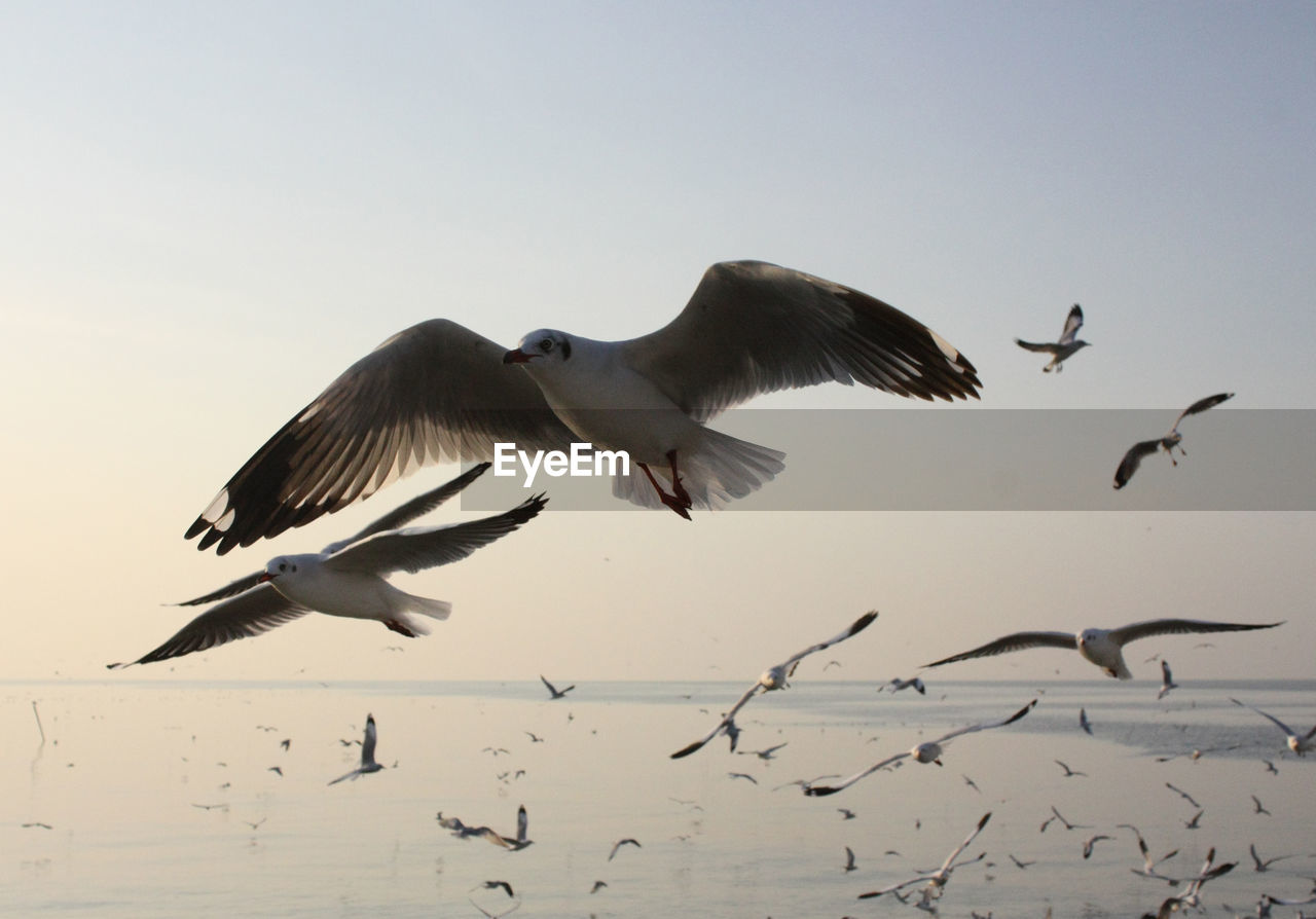 flying, bird, animals in the wild, animal themes, spread wings, animal wildlife, mid-air, nature, clear sky, motion, no people, low angle view, large group of animals, outdoors, beauty in nature, day, water, sky
