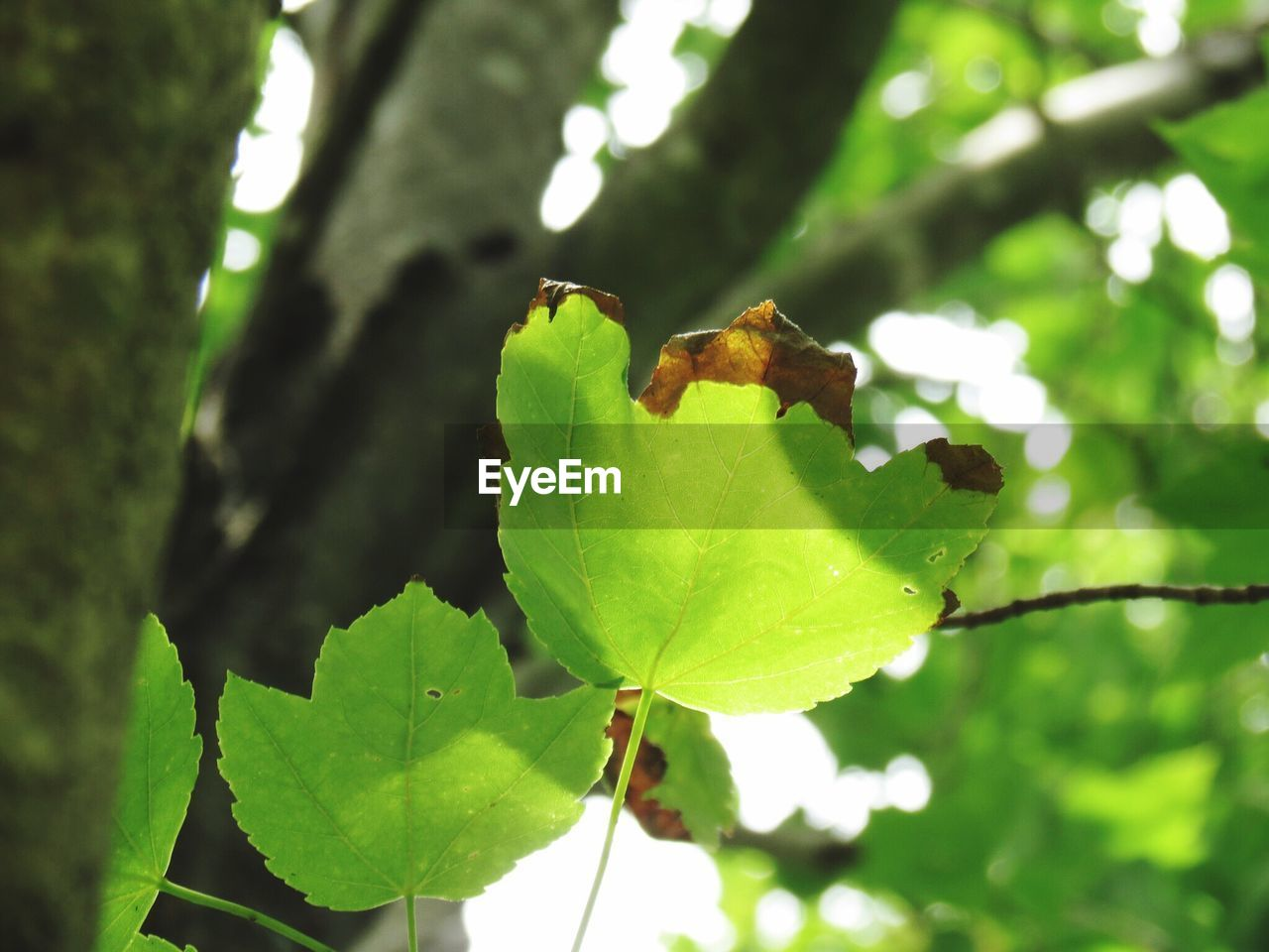 leaf, plant part, plant, tree, green color, focus on foreground, growth, animal, animal themes, animals in the wild, nature, day, animal wildlife, no people, one animal, close-up, branch, invertebrate, outdoors, insect