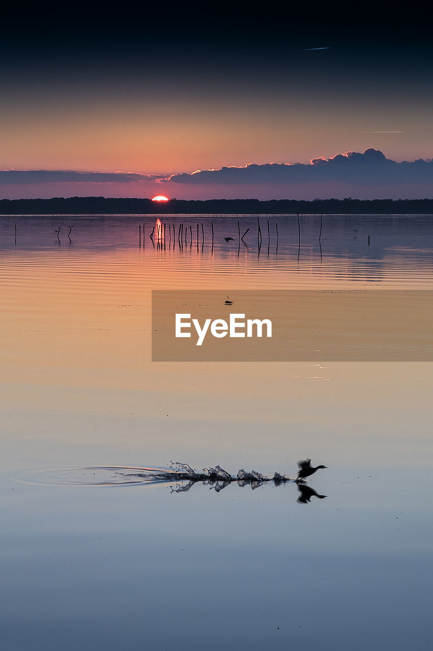 Scenic View Of Bird Landing On Calm Lake At Sunset