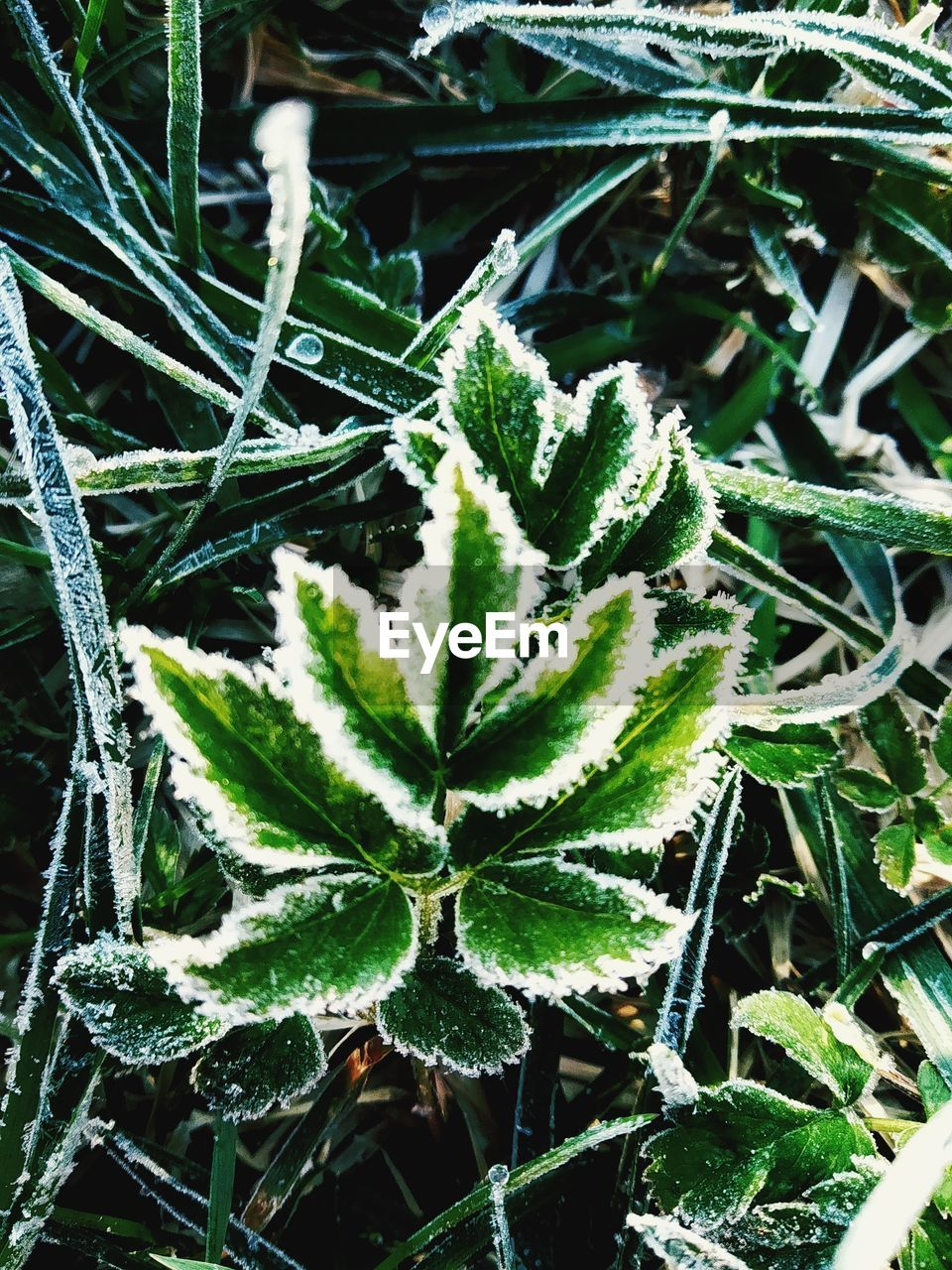 plant, growth, green color, leaf, plant part, day, beauty in nature, nature, close-up, no people, winter, cold temperature, high angle view, tranquility, freshness, outdoors, frozen, snow, selective focus, ice