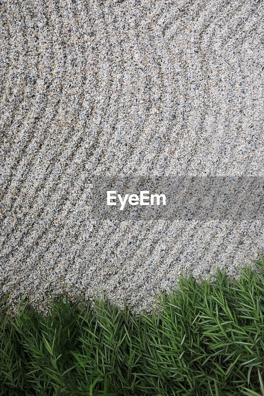 plant, grass, no people, full frame, day, green color, nature, growth, land, high angle view, backgrounds, field, textured, pattern, outdoors, gray, close-up, directly above, white color, environment, softness, clean
