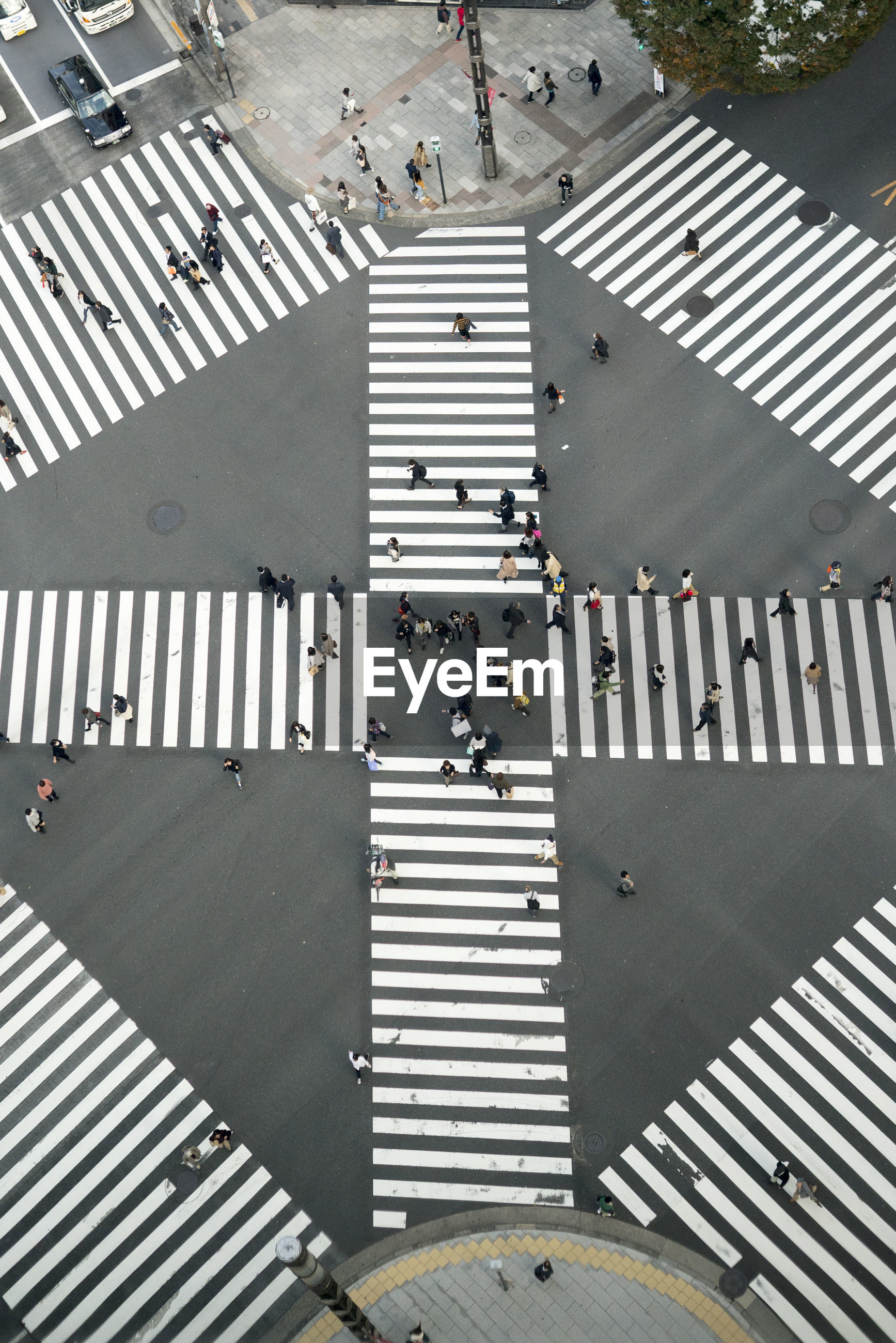 Directly above shot of people crossing street in city