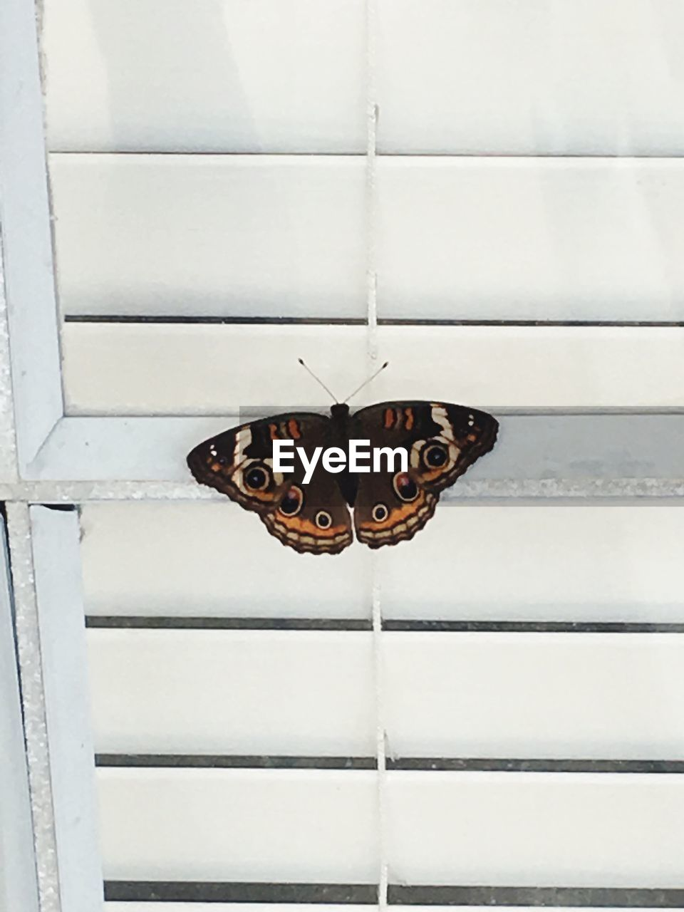 Butterfly on white blinds