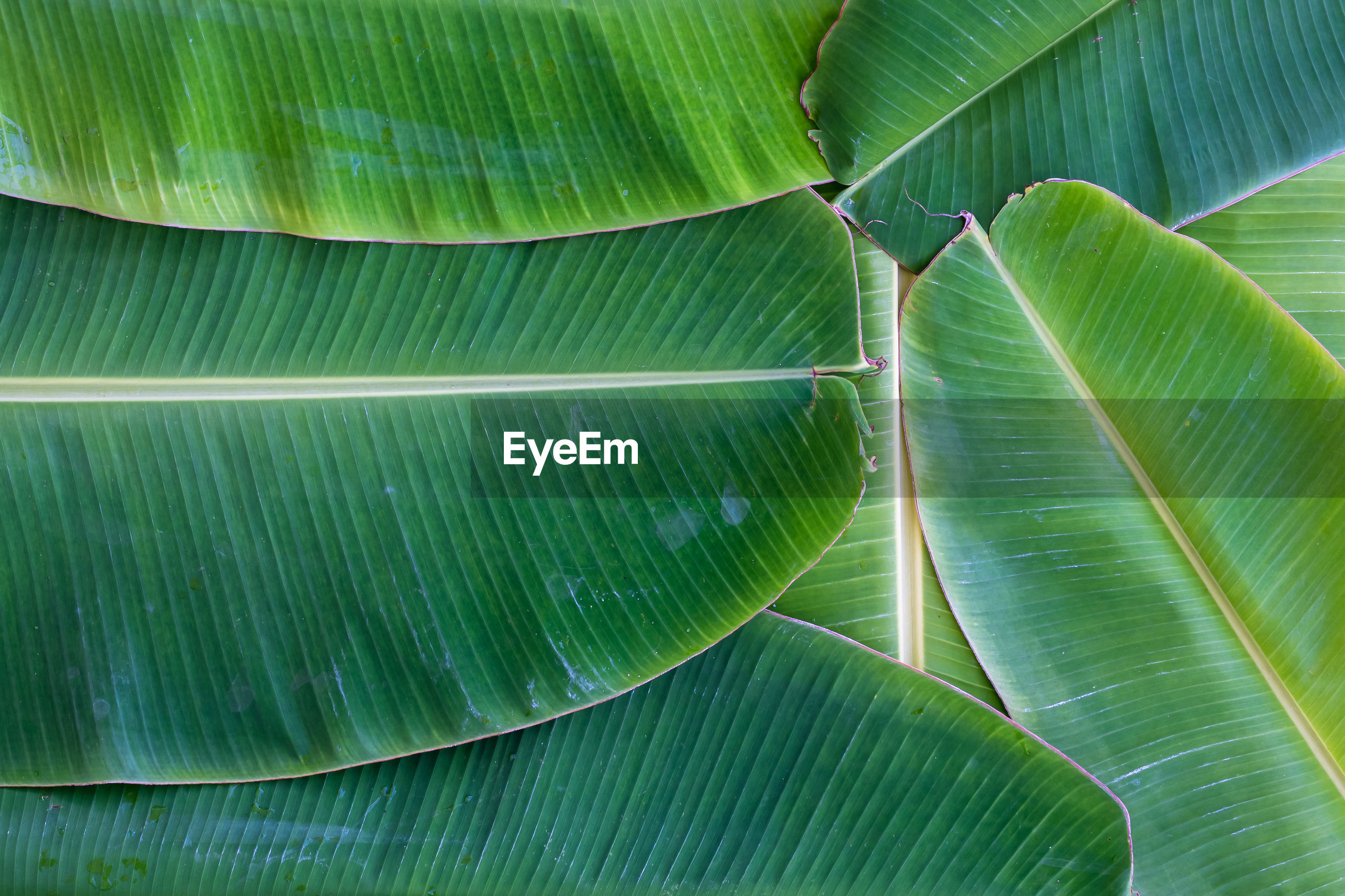 FULL FRAME SHOT OF PALM LEAF WITH TREE