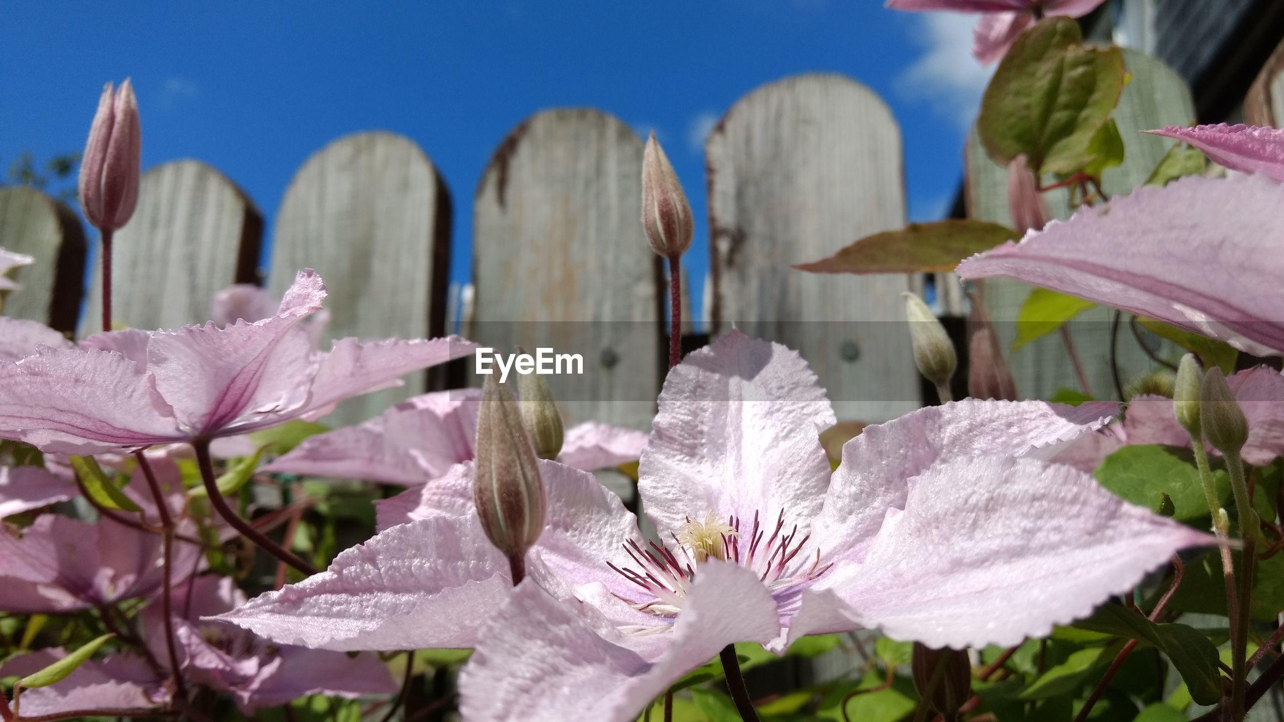 Detail shot of pink flowers