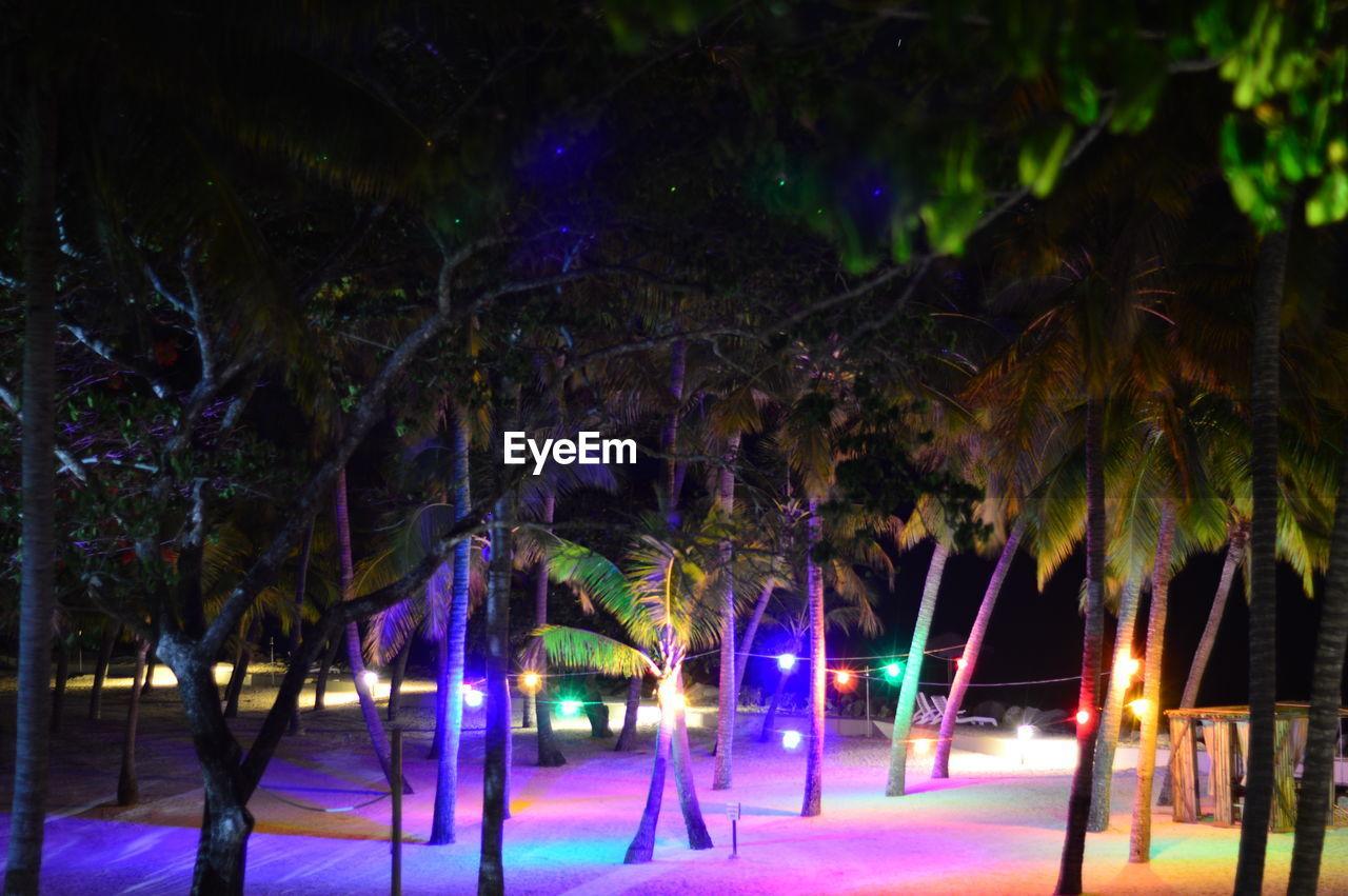 night, illuminated, tree, tree trunk, palm tree, nature, outdoors, beauty in nature, no people