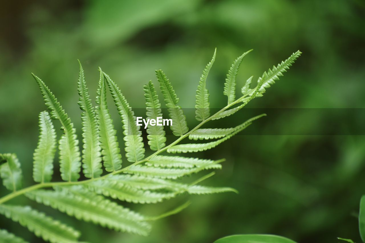 green color, leaf, growth, plant, plant part, beauty in nature, close-up, nature, fern, selective focus, no people, day, focus on foreground, tranquility, natural pattern, outdoors, pattern, vulnerability, fragility, freshness, leaves