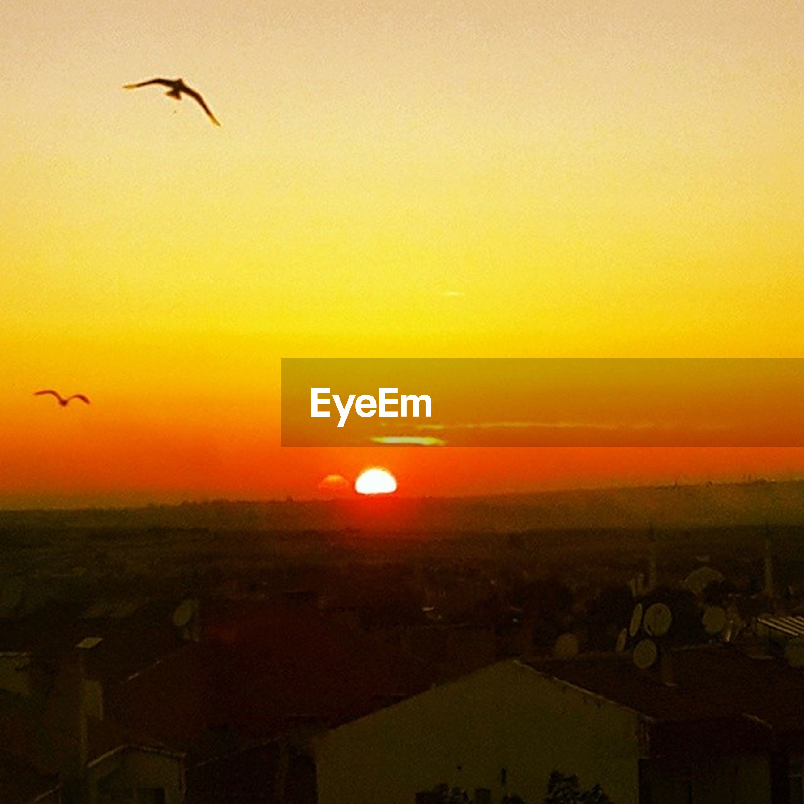 sunset, flying, bird, animal themes, animals in the wild, wildlife, silhouette, sun, orange color, mid-air, one animal, sky, scenics, beauty in nature, spread wings, nature, building exterior, built structure, copy space