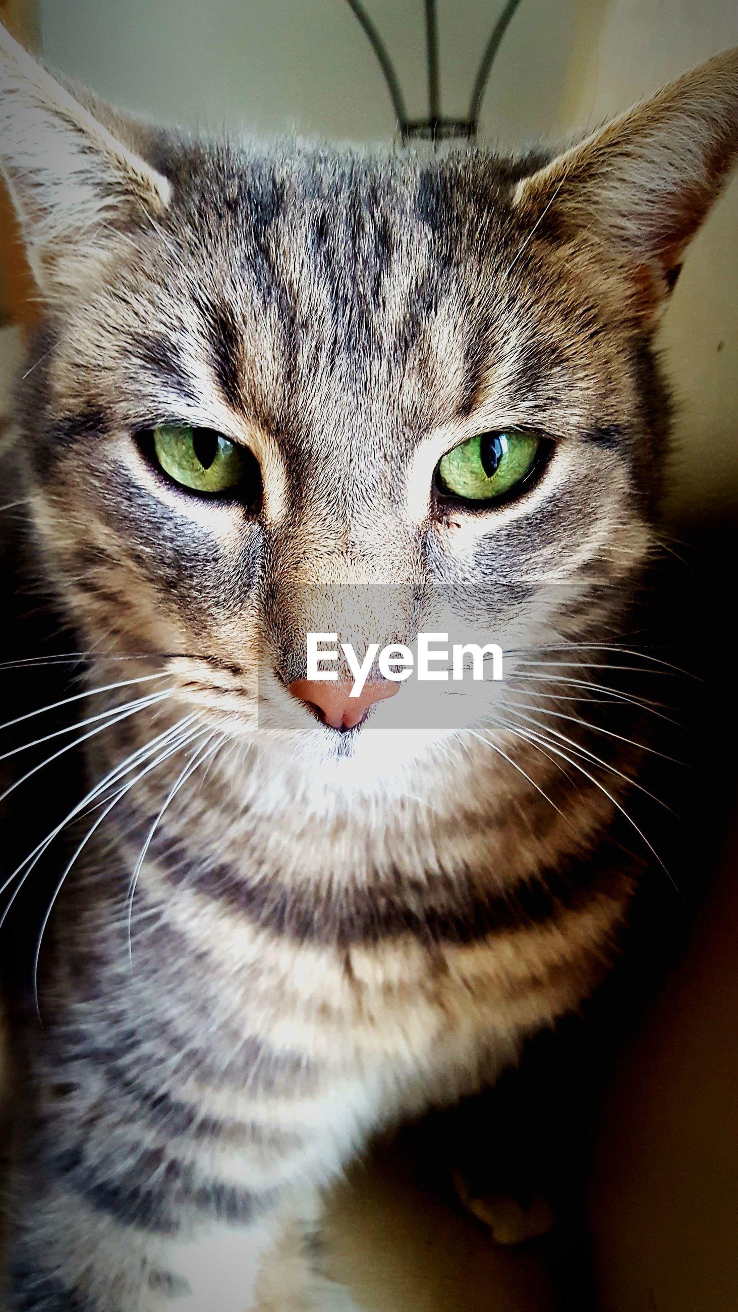 CLOSE-UP PORTRAIT OF CAT IN INDOORS