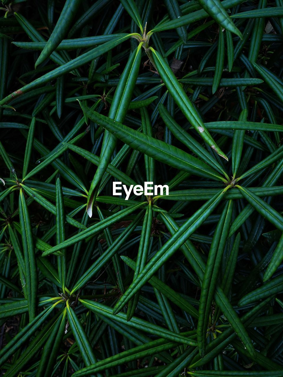 green color, full frame, plant, backgrounds, growth, plant part, leaf, grass, high angle view, nature, no people, close-up, day, field, directly above, beauty in nature, land, freshness, outdoors, botany, blade of grass, dew