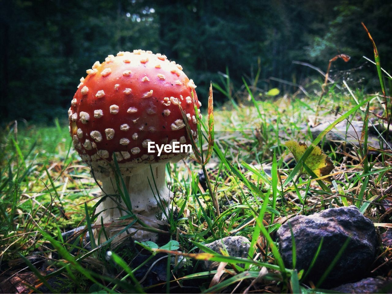 mushroom, growth, fungus, toadstool, nature, fly agaric mushroom, close-up, no people, red, beauty in nature, outdoors, day, fly agaric, grass, fragility, freshness