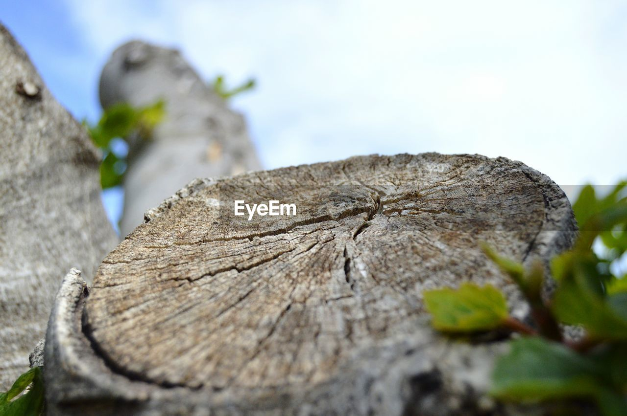 tree stump, nature, deforestation, log, close-up, outdoors, tree ring, tree trunk, day, tree, no people, wood - material, textured