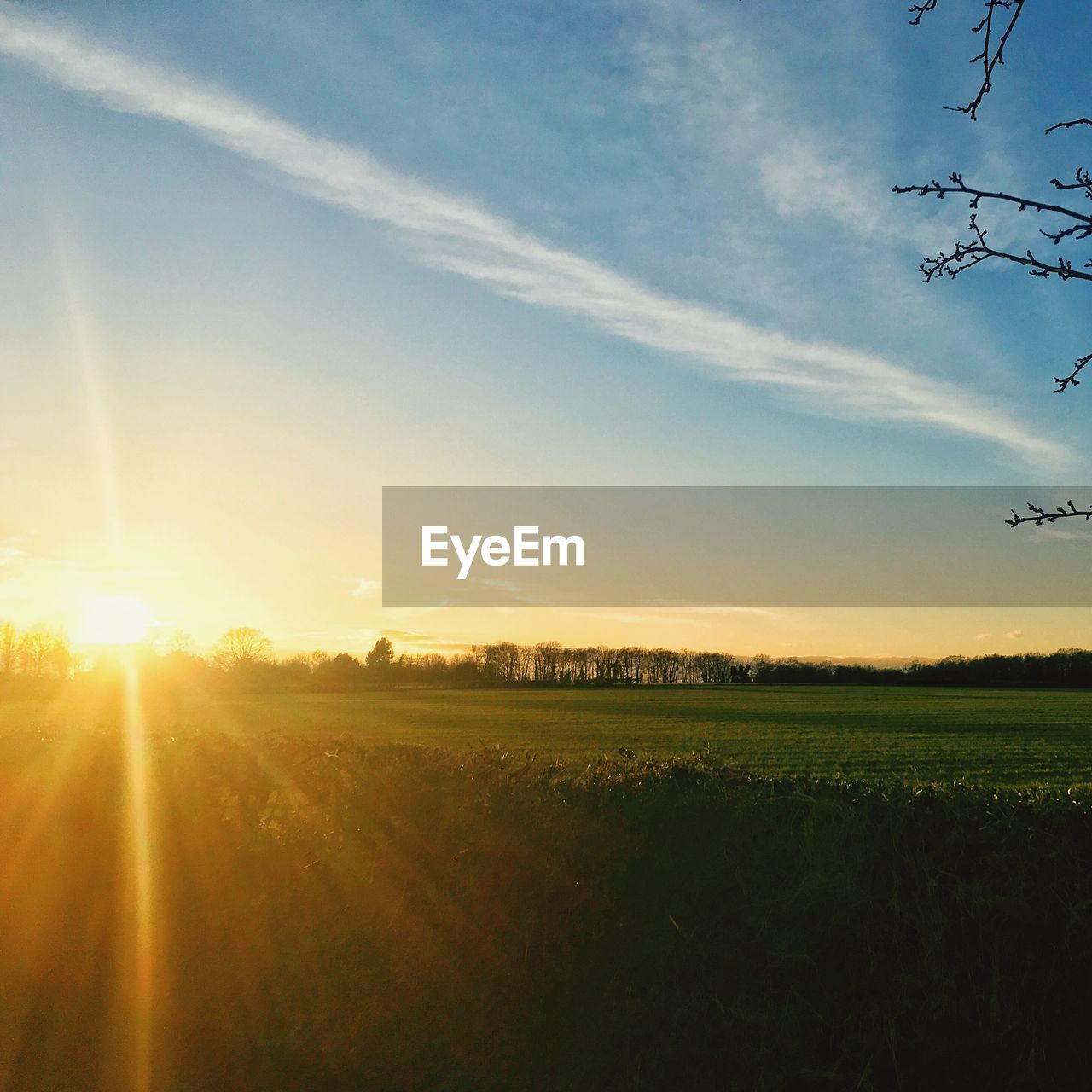 field, nature, landscape, beauty in nature, agriculture, tranquil scene, tranquility, rural scene, sunlight, scenics, sun, growth, sunbeam, sunset, sky, no people, outdoors, silhouette, grass, tree, day