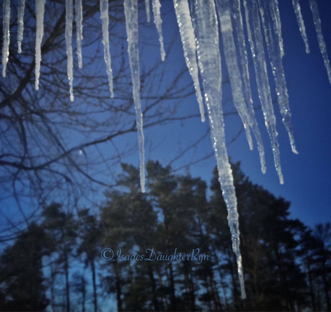 winter, cold temperature, tree, snow, text, weather, frozen, nature, day, bare tree, no people, ice, outdoors, branch, focus on foreground, close-up, icicle, beauty in nature, sky, fragility, freshness