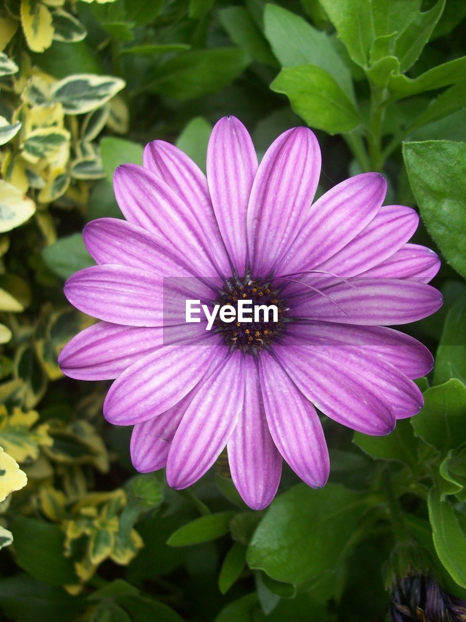flower, petal, fragility, growth, nature, beauty in nature, plant, flower head, freshness, blooming, no people, day, osteospermum, outdoors, leaf, close-up
