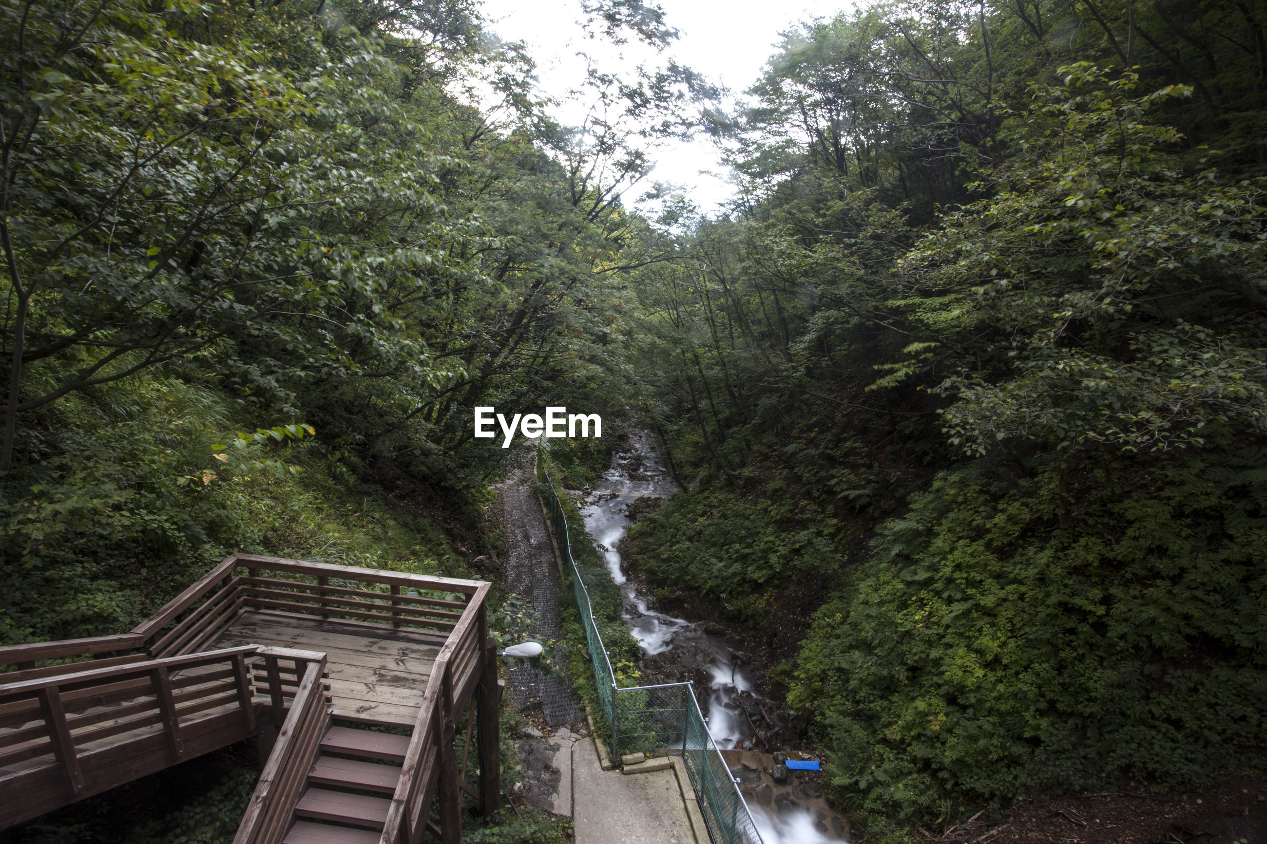 High angle view of bongrae waterfall in forest at ulleungdo island