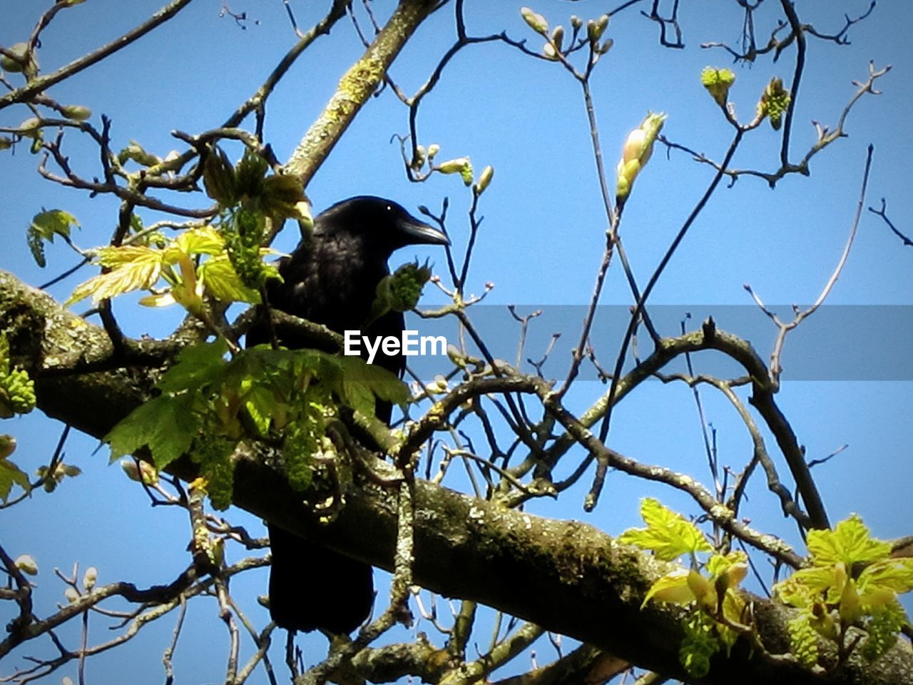 low angle view, tree, branch, animals in the wild, animal themes, one animal, perching, bird, day, nature, animal wildlife, no people, outdoors, clear sky, beauty in nature, sky, close-up