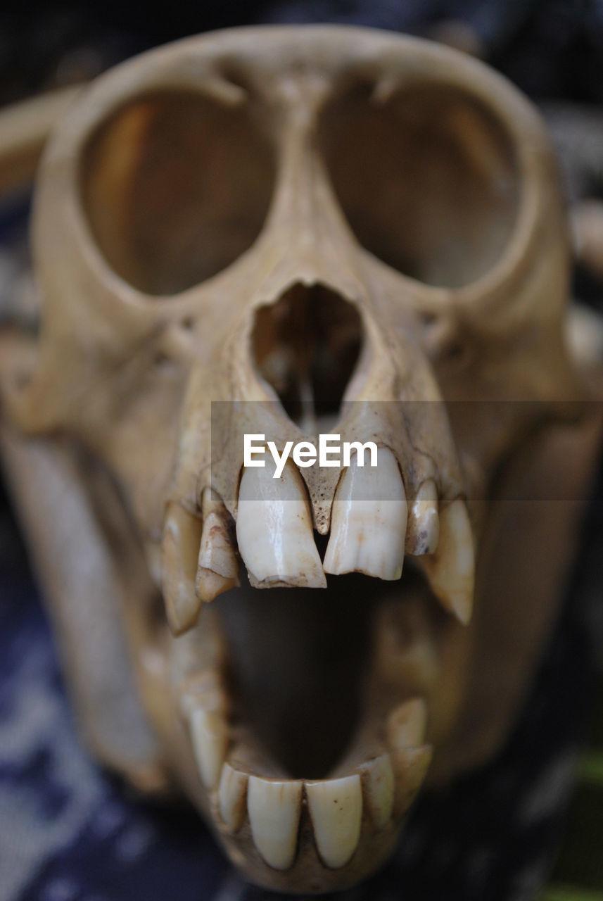 Close-Up Of Animal Bone