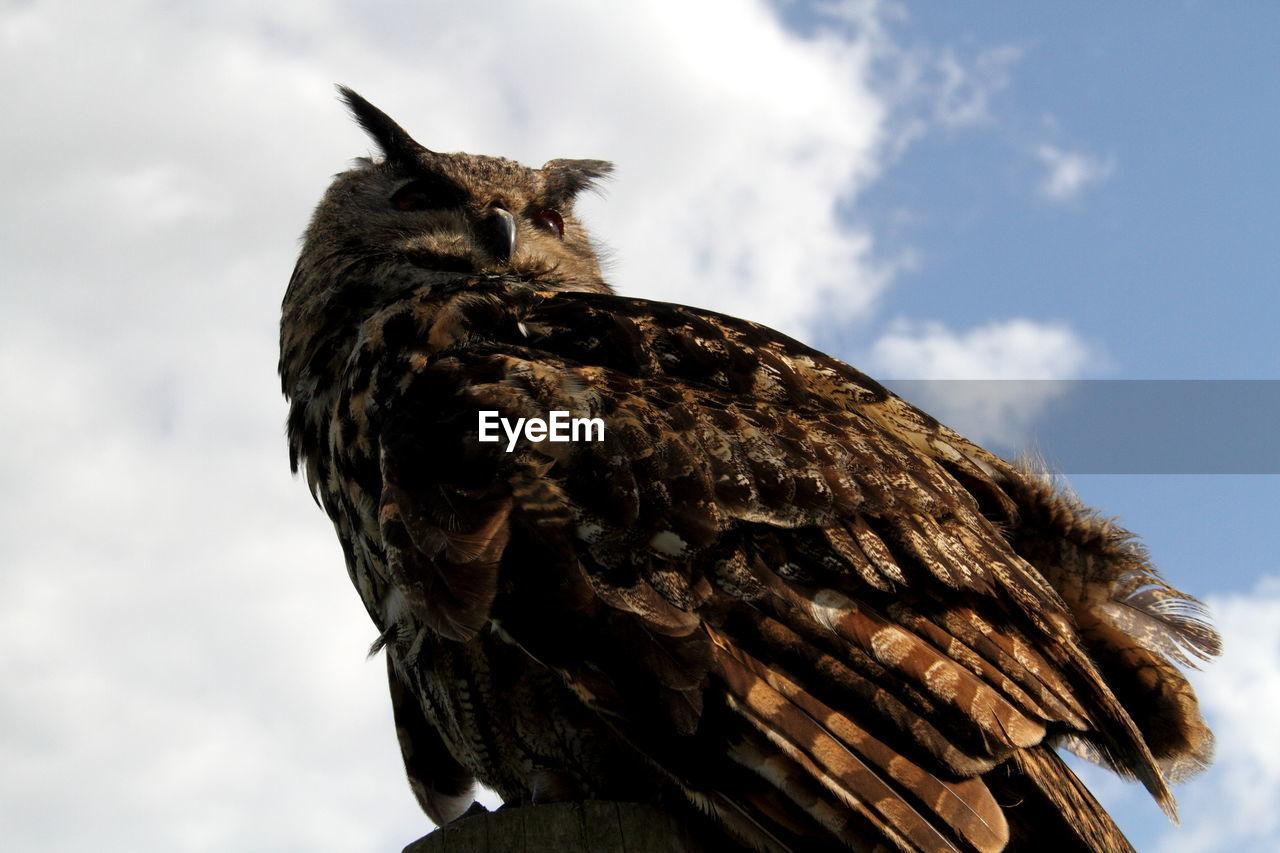 Close-up of eagle owl against sky