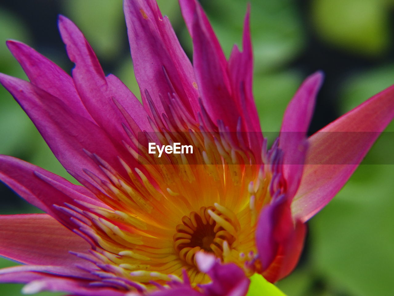 flower, petal, beauty in nature, fragility, flower head, growth, nature, freshness, plant, close-up, stamen, outdoors, no people, pink color, day, blooming, springtime, day lily