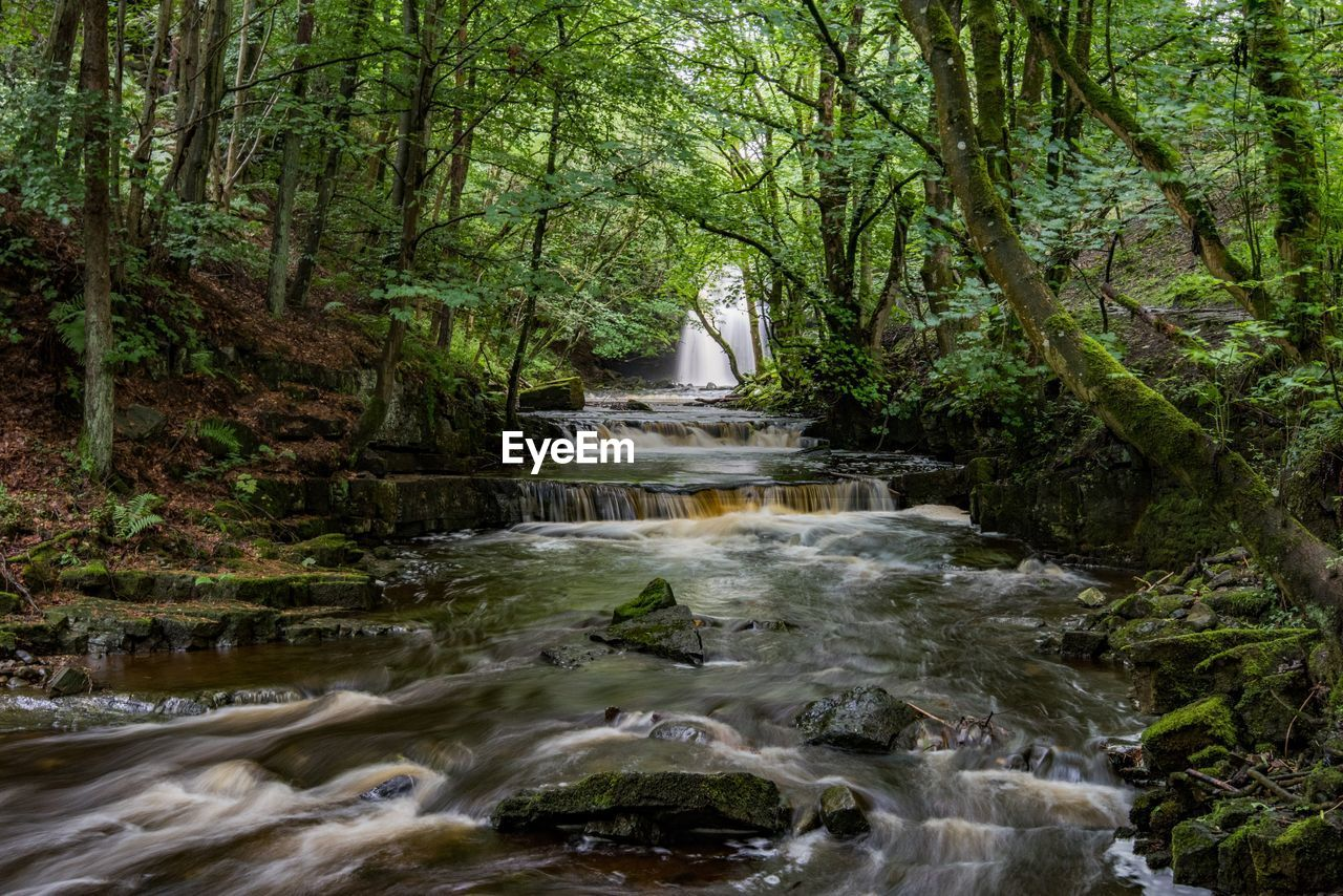 water, tree, forest, plant, motion, scenics - nature, flowing water, beauty in nature, long exposure, land, nature, waterfall, no people, blurred motion, day, flowing, environment, river, rock, stream - flowing water, outdoors, rainforest, running water