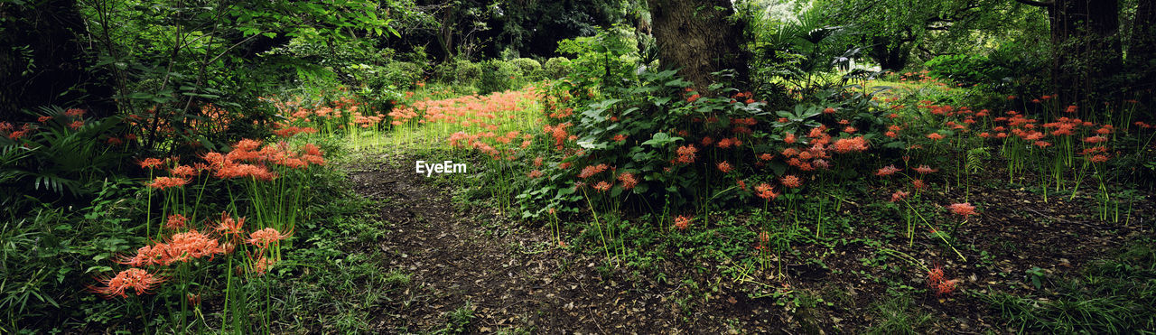 plant, land, flower, flowering plant, nature, growth, beauty in nature, tranquility, forest, tree, no people, footpath, summer, foliage, outdoors, tranquil scene, multi colored, field, bush, freshness, spring, flowerbed