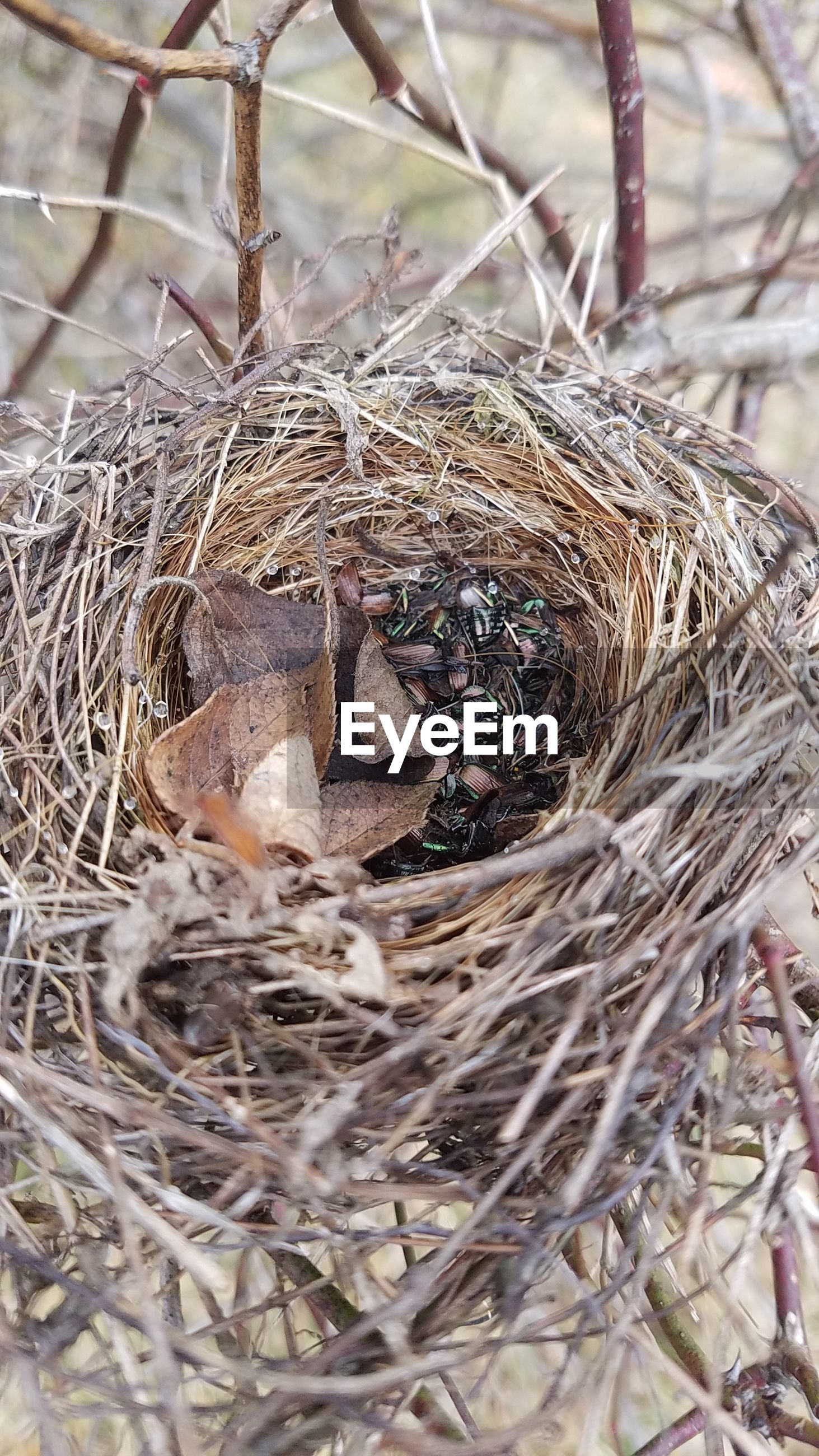 High angle view of birds in nest