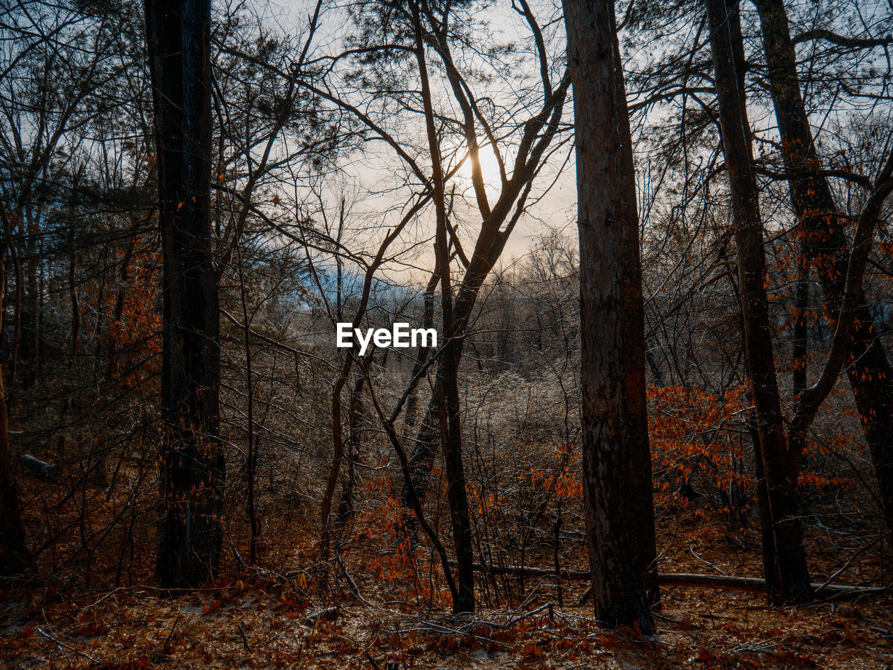forest, tree, tree trunk, bare tree, autumn, woodland, nature, forest fire, tranquility, no people, day, outdoors, branch, beauty in nature, tree area, bleak