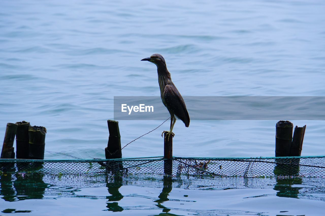 Bird On Wooden Post In Lake