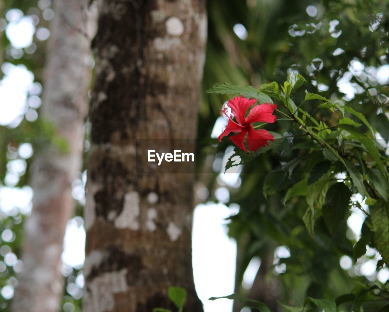plant, flowering plant, flower, growth, tree trunk, trunk, fragility, vulnerability, beauty in nature, freshness, nature, focus on foreground, tree, day, low angle view, close-up, no people, petal, flower head, outdoors