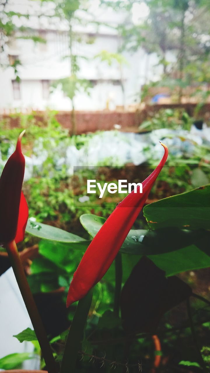 plant, growth, focus on foreground, close-up, nature, day, no people, outdoors, leaf, green color, beauty in nature, freshness, tree, greenhouse, flower, animal themes