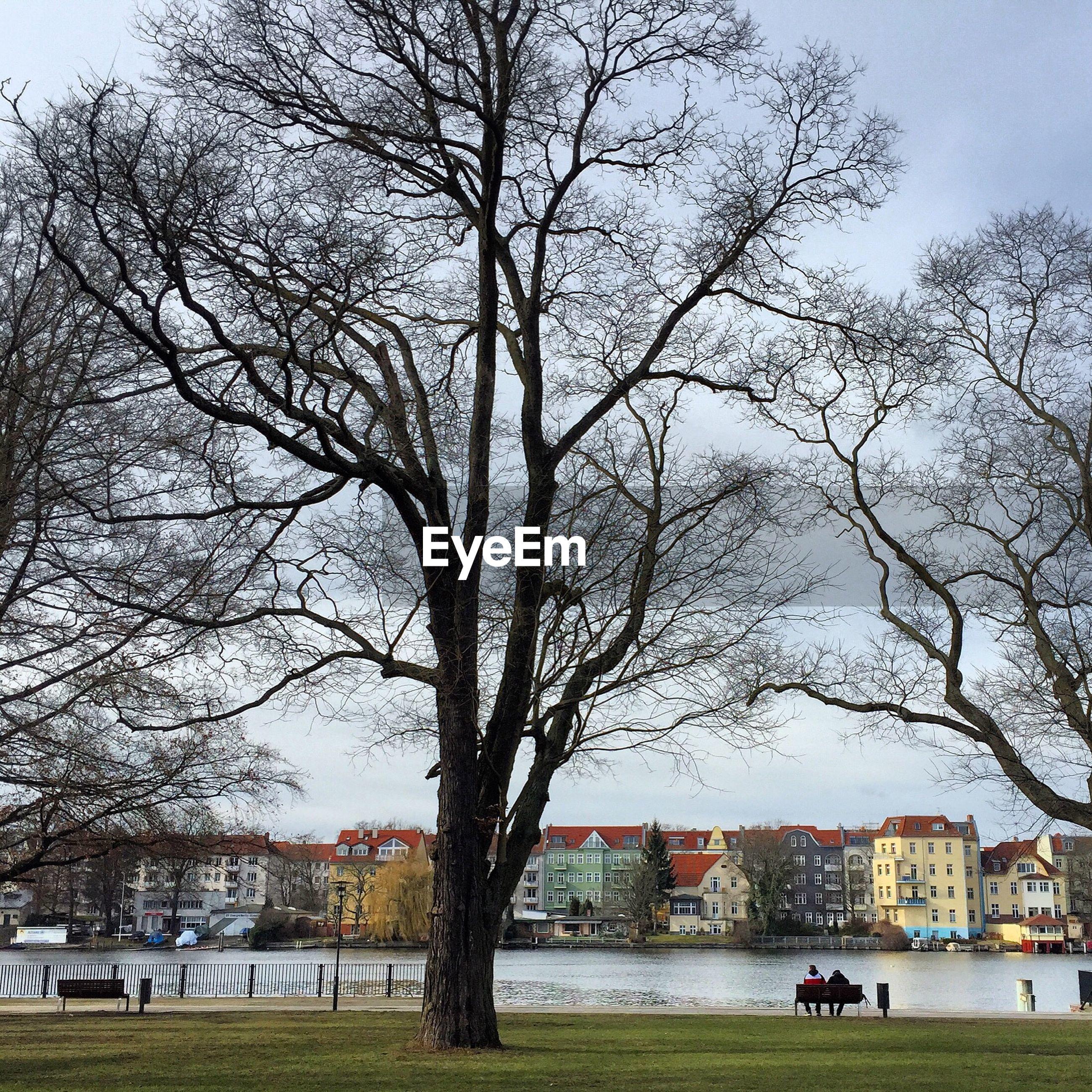 Bare tree on riverbank