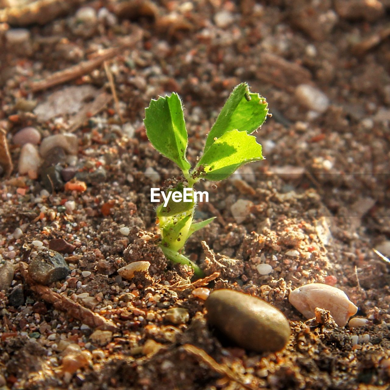 growth, beginnings, plant, nature, new life, green color, leaf, close-up, sapling, no people, fragility, day, outdoors, freshness
