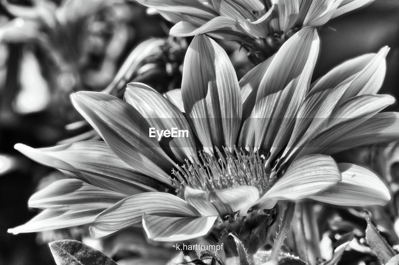 flower, petal, flower head, fragility, beauty in nature, nature, growth, freshness, close-up, no people, plant, day, outdoors, blooming, passion flower