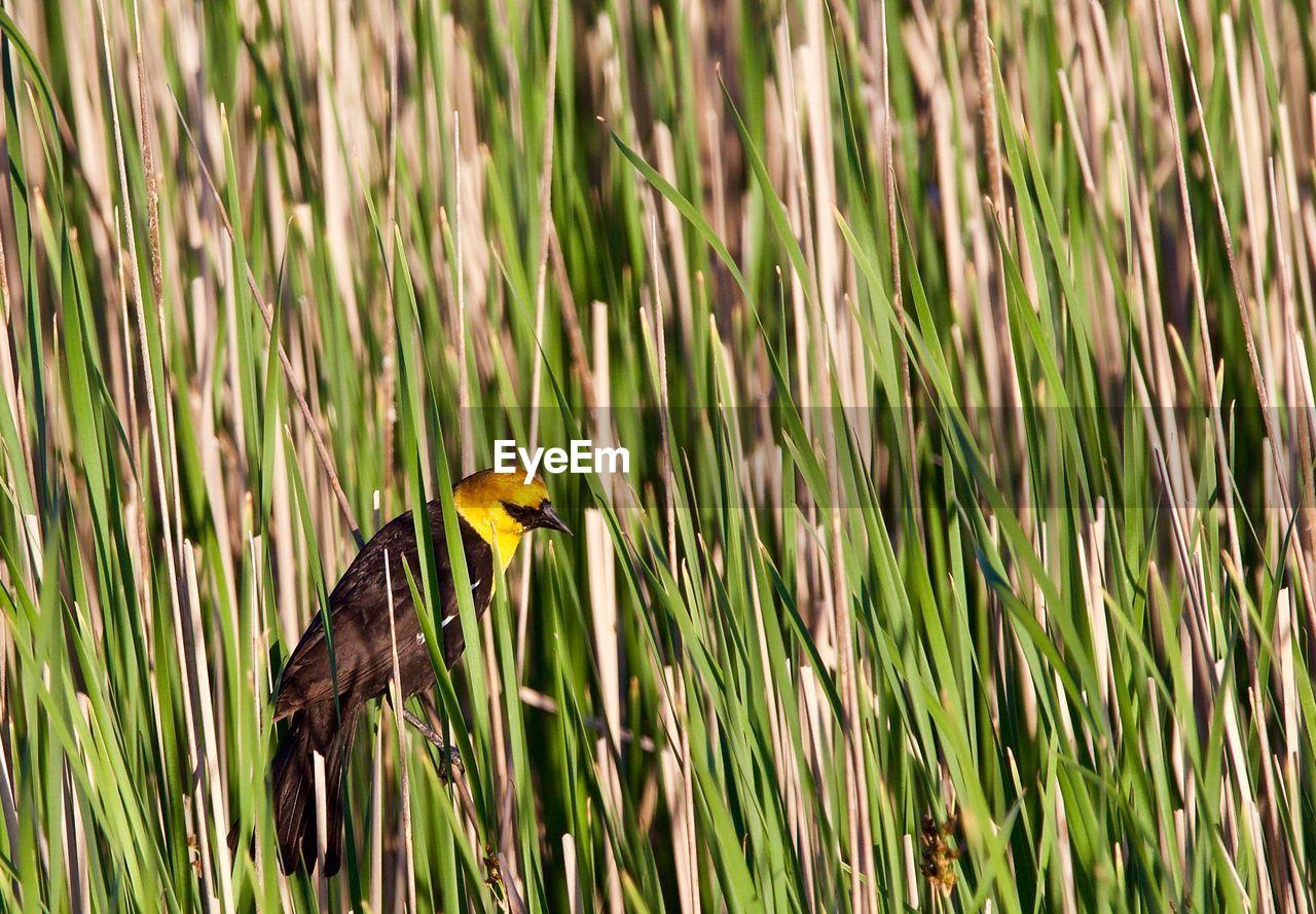 BIRD PERCHING ON A GRASS
