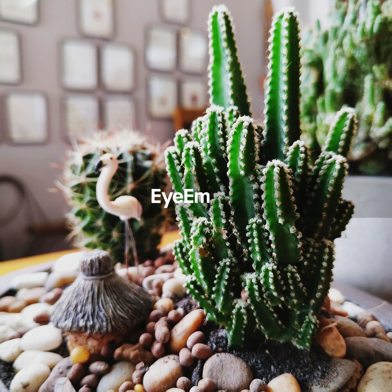 green color, succulent plant, no people, cactus, food, growth, close-up, indoors, freshness, food and drink, plant, potted plant, still life, selective focus, wellbeing, day, focus on foreground, healthy eating, large group of objects, nature