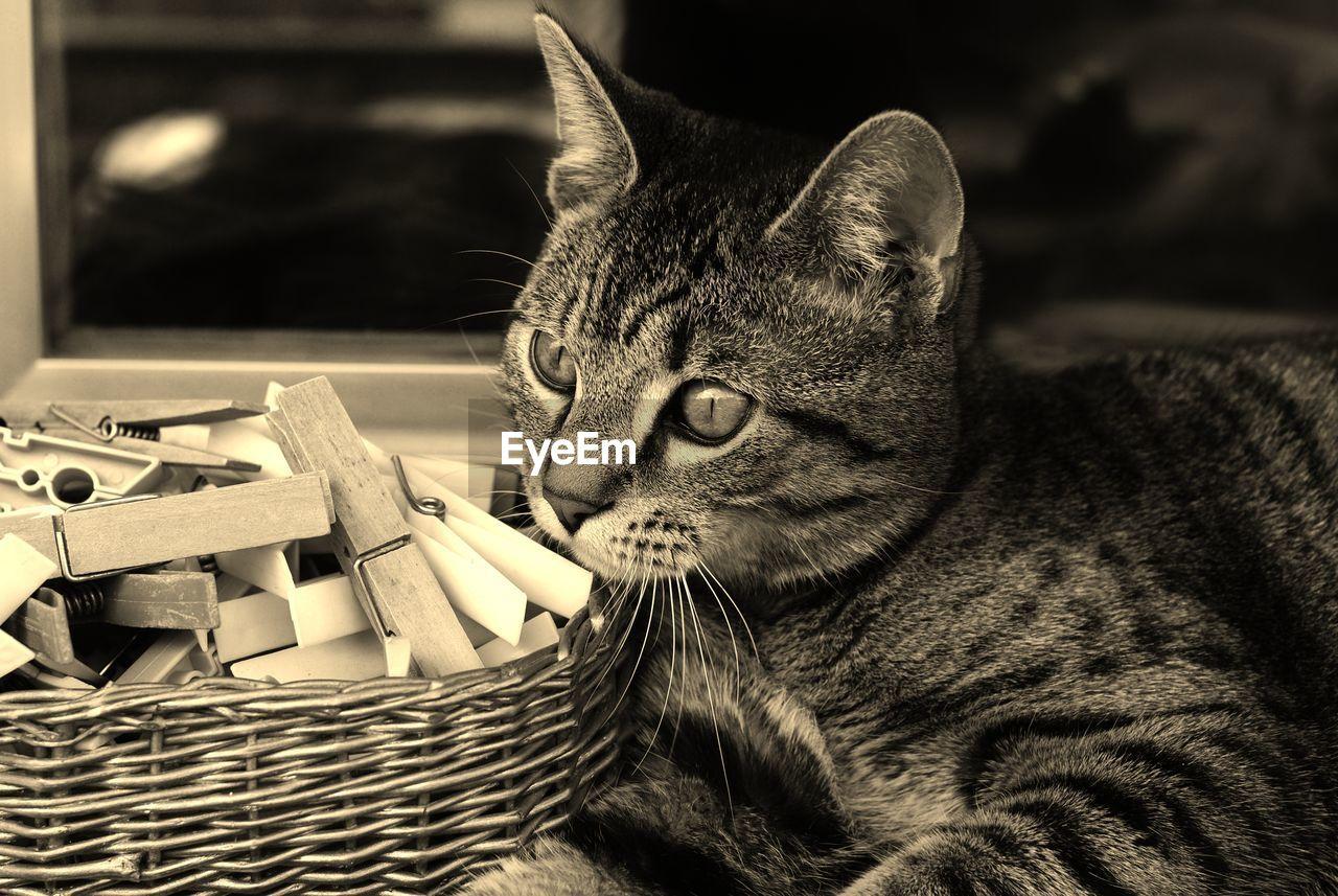 CLOSE-UP OF A CAT LOOKING AT CAMERA