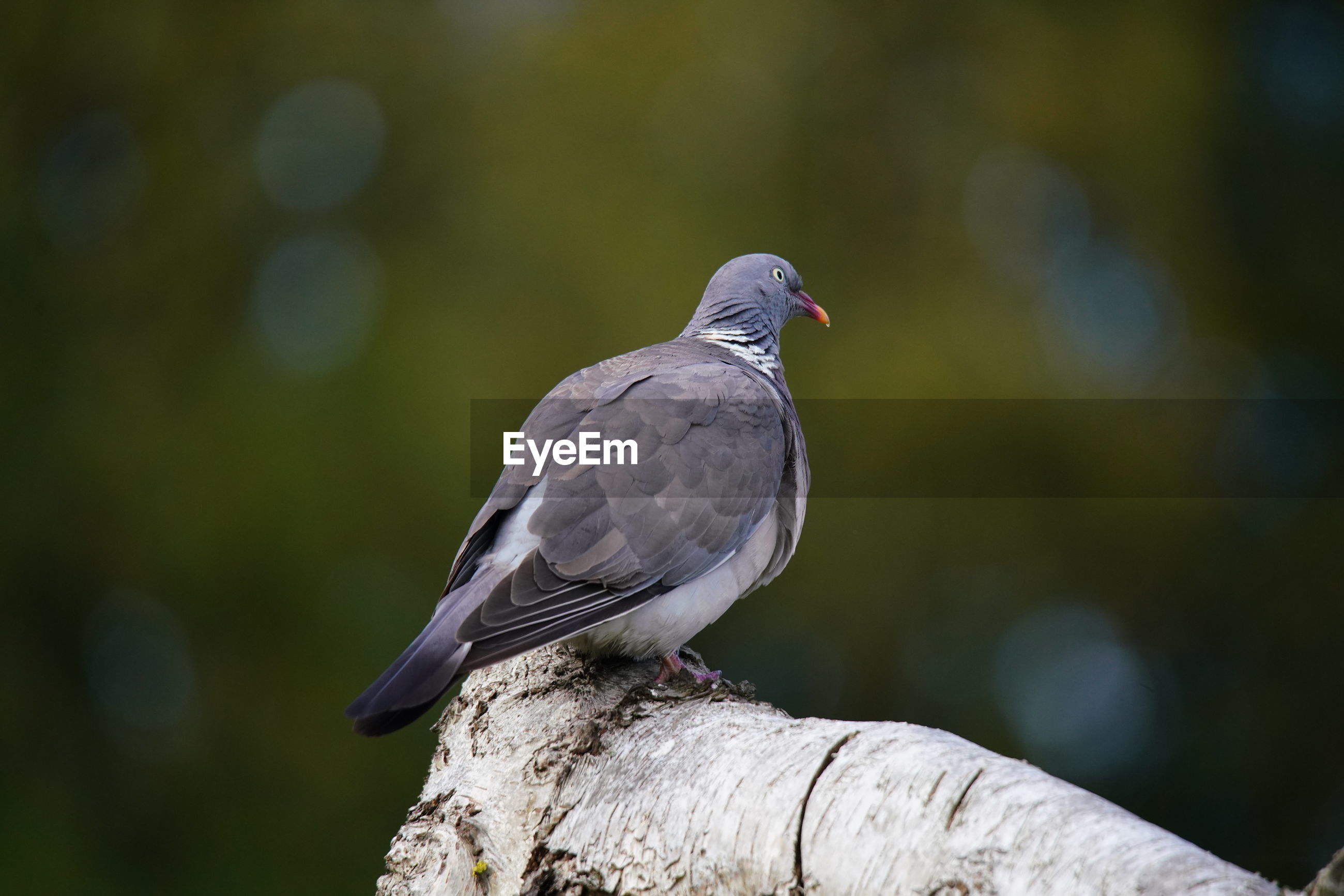 BIRD PERCHING ON WOOD