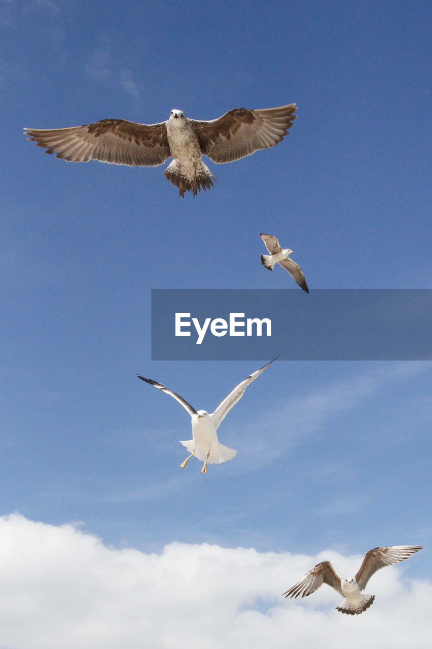 flying, spread wings, bird, animal themes, animal wildlife, sky, animal, animals in the wild, vertebrate, group of animals, mid-air, low angle view, cloud - sky, no people, nature, motion, seagull, day, blue, three animals, flock of birds
