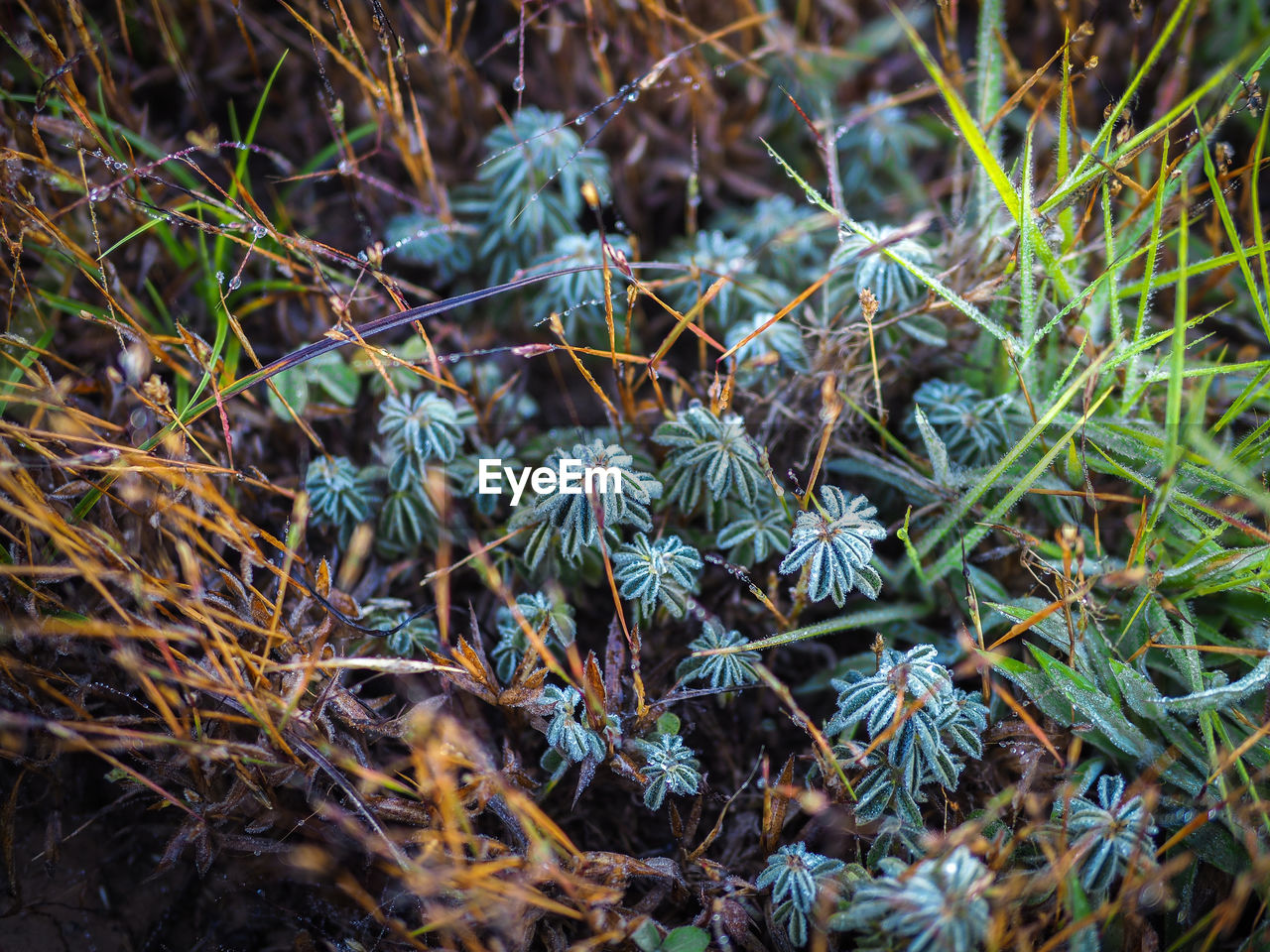 plant, growth, no people, close-up, green color, nature, day, beauty in nature, land, selective focus, field, tranquility, fragility, leaf, vulnerability, plant part, focus on foreground, high angle view, outdoors, tree, coniferous tree, spiky