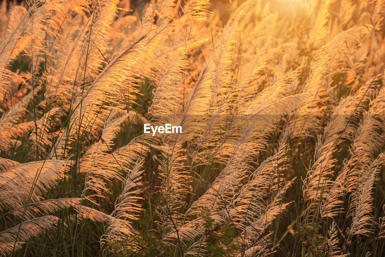 plant, growth, land, beauty in nature, no people, nature, landscape, field, tranquility, environment, crop, scenics - nature, full frame, day, agriculture, backgrounds, close-up, rural scene, outdoors, cereal plant, climate, arid climate