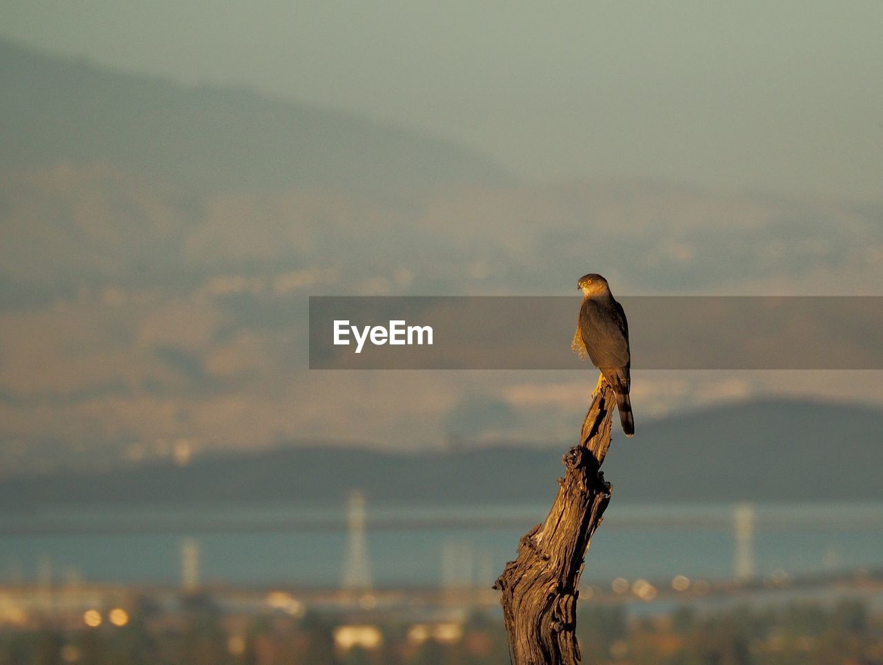 vertebrate, focus on foreground, animals in the wild, bird, animal, animal themes, one animal, animal wildlife, perching, sky, no people, nature, sunset, mountain, outdoors, sea, cloud - sky, beauty in nature, day, wood - material, wooden post