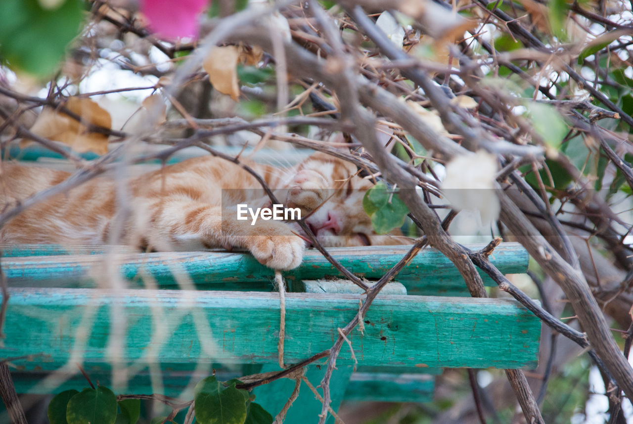 animal themes, animal, mammal, vertebrate, cat, one animal, pets, feline, plant, domestic animals, domestic, domestic cat, no people, tree, nature, selective focus, branch, relaxation, day, outdoors