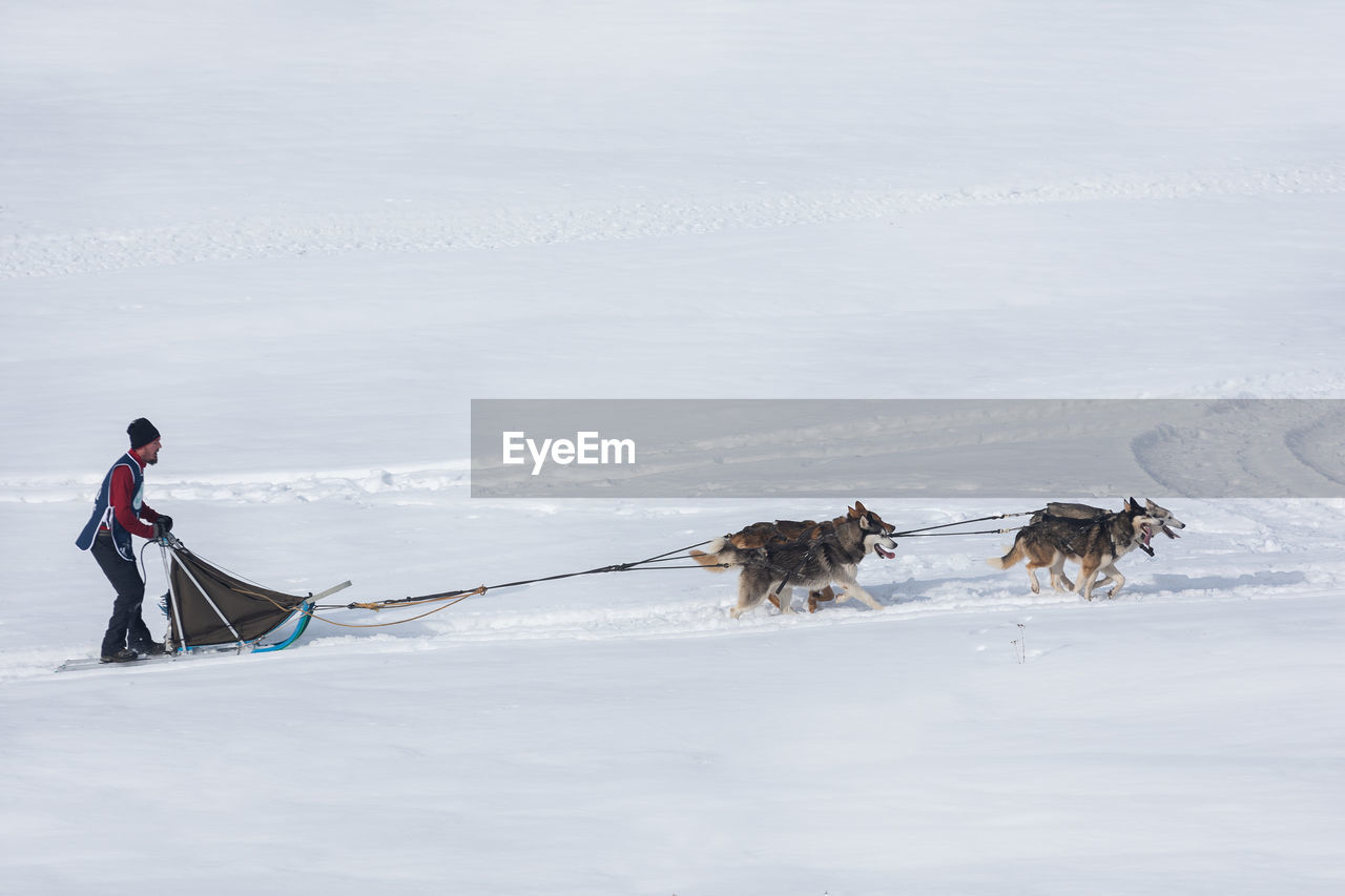 VIEW OF DOG ON SNOW
