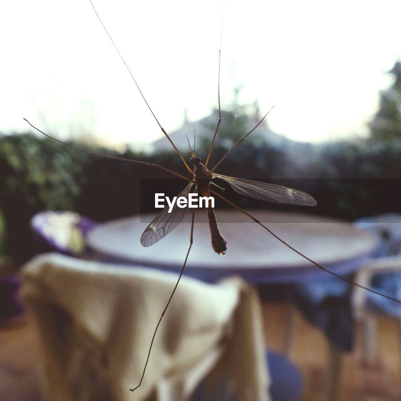 Close-Up Of Mosquito On Glass
