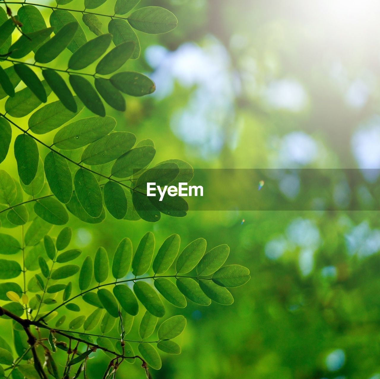 green color, leaf, plant, growth, plant part, tree, beauty in nature, nature, day, no people, close-up, focus on foreground, tranquility, outdoors, leaves, selective focus, freshness, sunlight, low angle view, green