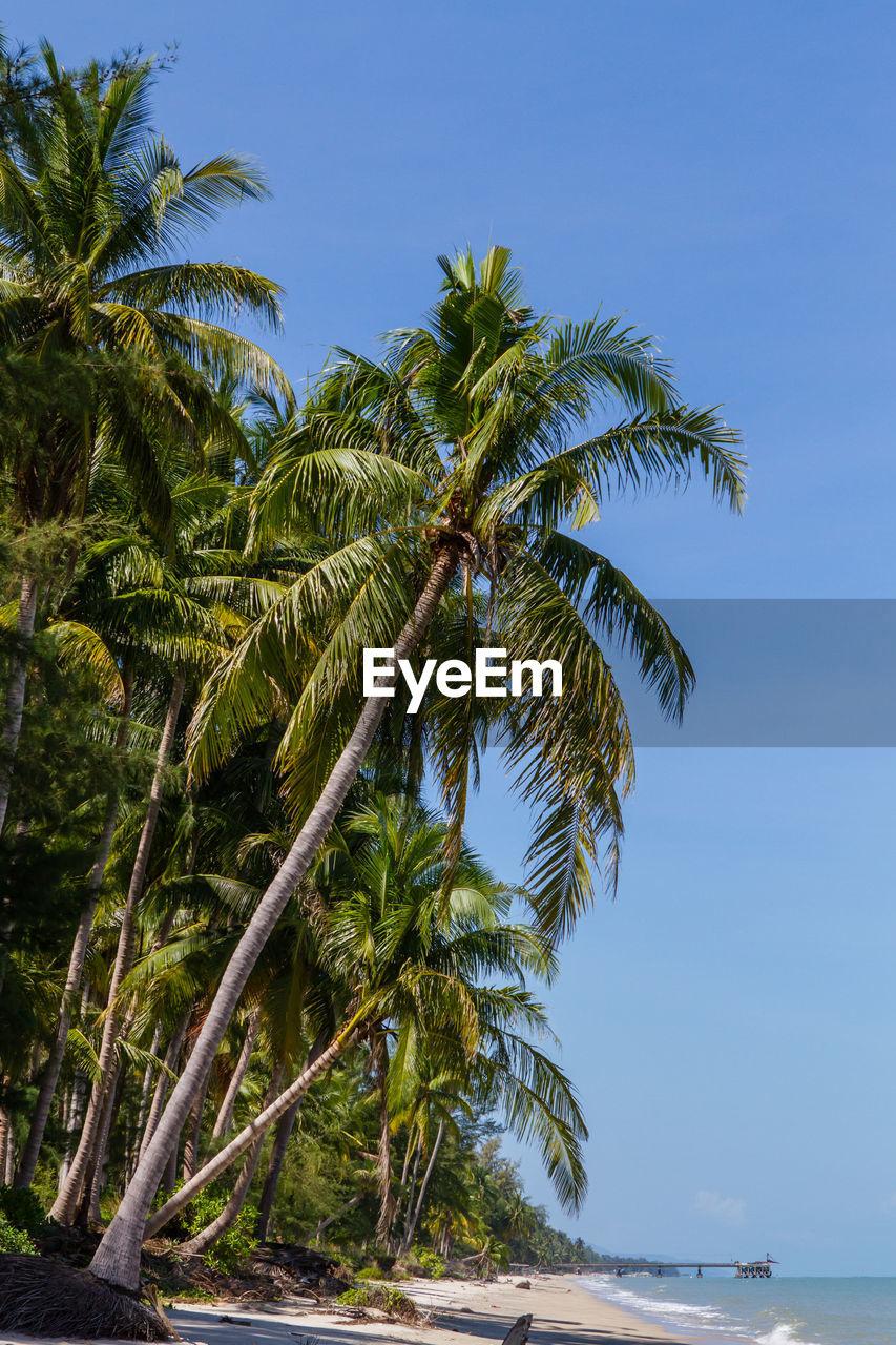 Coconut palm trees at beach against clear blue sky