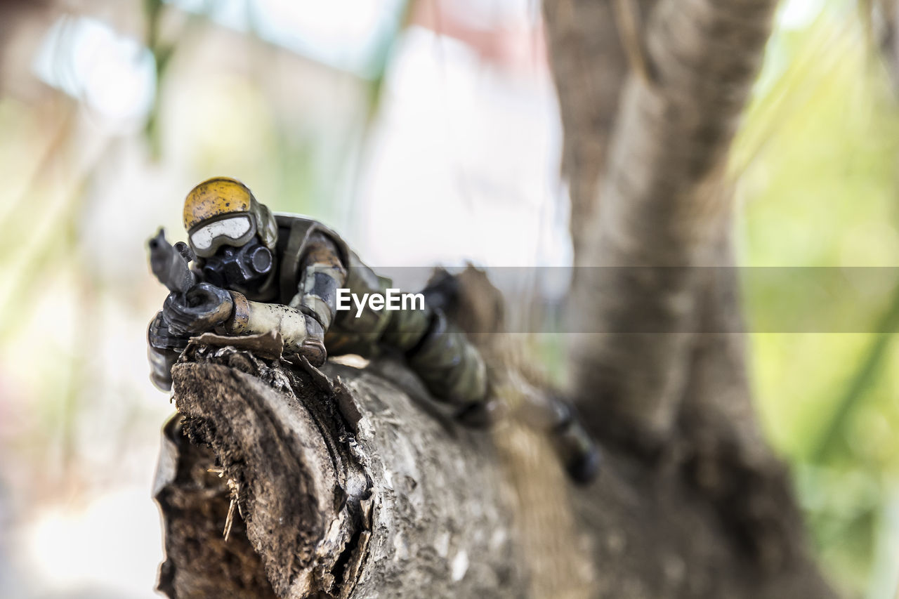 selective focus, tree, focus on foreground, animal wildlife, day, close-up, animals in the wild, tree trunk, trunk, animal themes, animal, no people, nature, sculpture, art and craft, outdoors, plant, representation, solid, statue